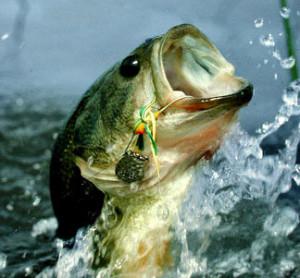big-largemouth-bass-jumpingdannys-sports-lcpefz0h